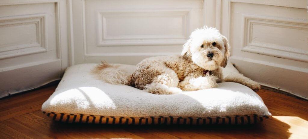 No hay lugar más seguro para guardar el dinero en casa que bajo un perro guardián